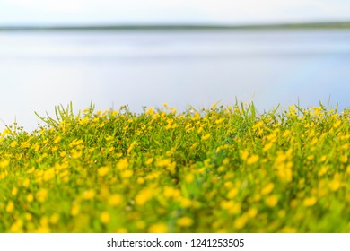 Flowers on the Lena River in Sakha Yakutia Republiiic in Russia