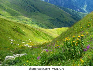 Flowers on meadow. Mountain valley