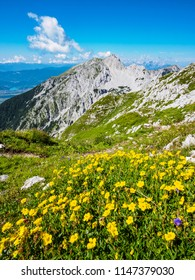 Flowers on the meadow on top of Vrtaca mountain with a view Stol mountain in the summer, Slovenia
