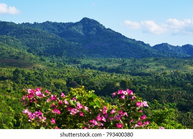 Flowers on the mountain slopes background on a beautiful sunny day. View of rainforest and green mountains. Amazing landscape view. Nature landscape with blue sky and clouds. Selective focus.