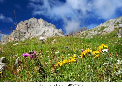 flowers on mountains