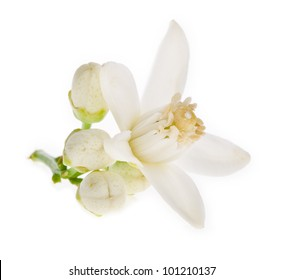 flowers on a orange isolated on white background