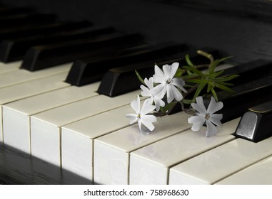 Flowers on piano flaps - condolence card