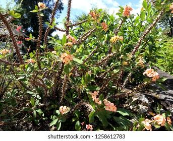 Flowers on Samosir island