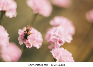 Flowers on spring green field and bee. Blurry light background. Season artistic soft focus image