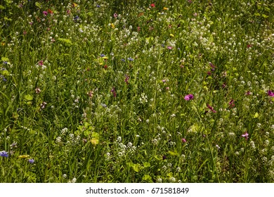 Flowers on a summer meadow