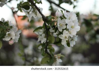 Flowers on the tree.
