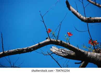 The flowers on the tree