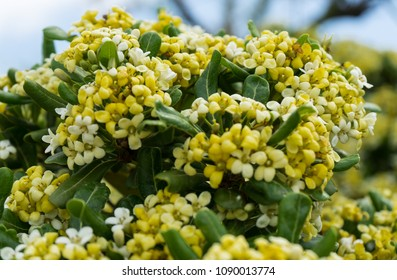 Flowers on a tree in blossom