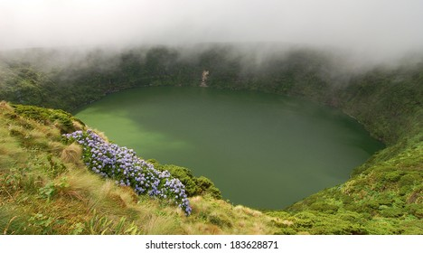 Flowers on the volcano in azores, Fayal, portugal