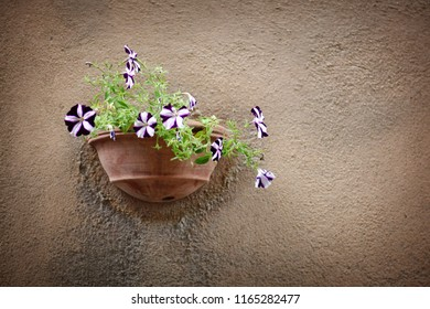 Flowers on a wall in Tuscany,