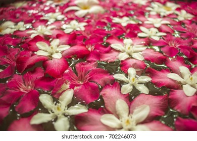 Flowers on water Abstract  background.