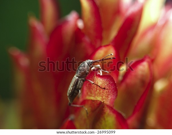 Flowers on the weevil