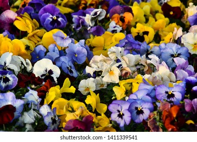 flowers on a white background, photo as a background, digital image