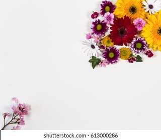 Flowers on a white background with space for copy