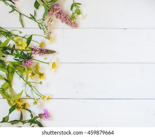 Flowers on a white background. View from above