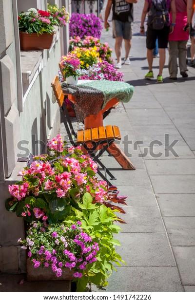 Flowers On Windows Blooming Petunias Pots Stock Photo Edit Now