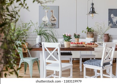 Flowers on wooden table in white cottage dining room interior with posters and chairs. Real photo