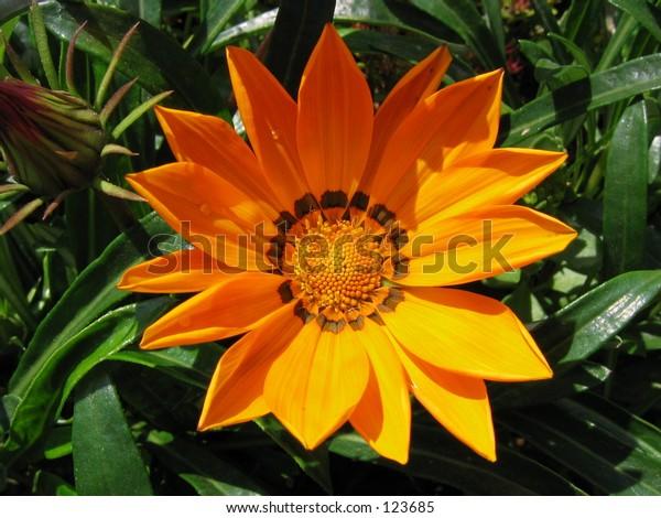 flowers, orange