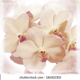 flowers of an orchid vanda close up