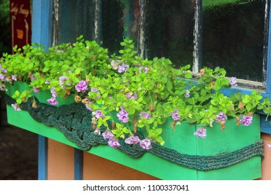 Flowers in an outside planter