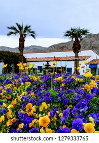 Flowers and palms at the Waldorf in La Quinta