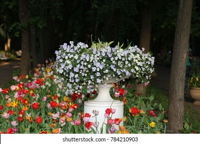 flowers in Park in spring with colorful blooming tulips and a vase with pansies