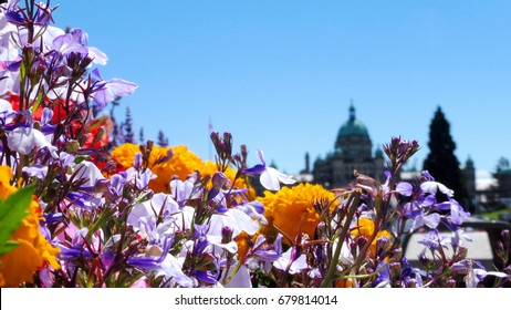 The flowers with the parliament in the background in Victoria, BC