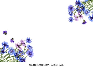 Flowers, petals, stems, branches on a white background, composition of flowers, flower pattern on isolated background