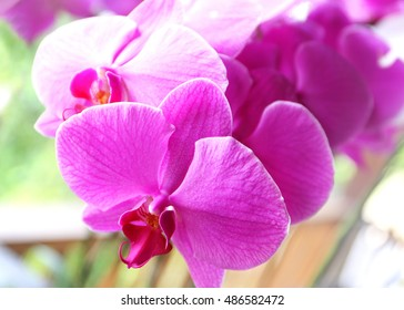 flowers pink orchid