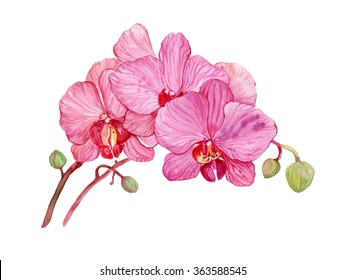 flowers pink Orchid .illustration watercolor