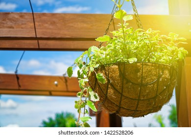 Flowers and plant in flowerpot, Growing plant in wooden flowerpot. Sun beam lights