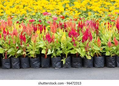 Flowers in a plant nursery
