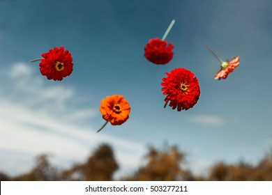 Flowers planted float in weightlessness