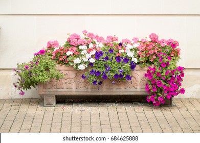 Flowers Planter With Different Types And Colors