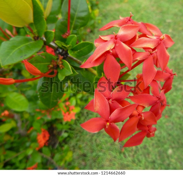 Flowers Plants Cuba Rare Unique Flora Stock Photo (Edit Now