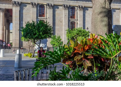 Flowers and Plants at Downtown