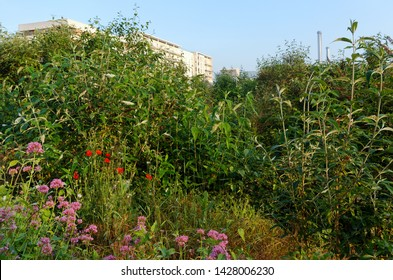 Flowers and plants in industrial wasteland of Paris suburb