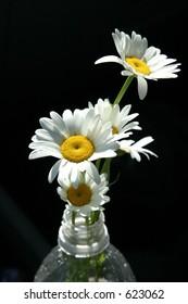 Flowers in a plastic bottle