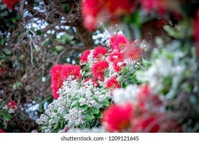 Native Nz Plants Images Stock Photos Vectors Shutterstock