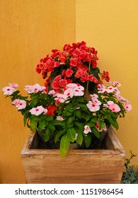 flowers in pot