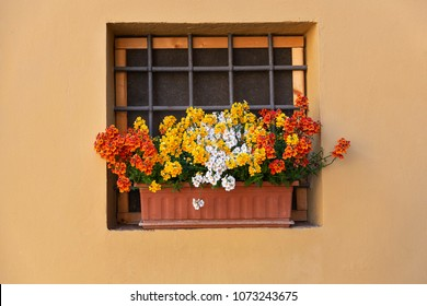 Flowers in a pot on the window sill