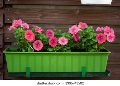 flowers in a pot petunia on the wall outside