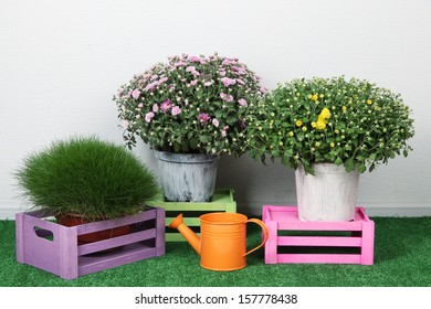 Flowers in pots with boxes and watering can on grass on grey background