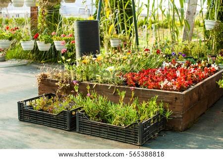 Flowers Pots Greenhouse Garden Market Stock Photo (Edit Now ...