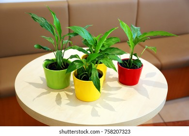 flowers in pots on the table