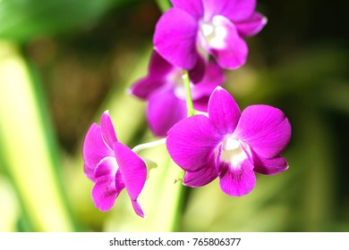 Flowers purple orchid on background