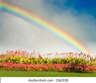 Flowers with a rainbow behind them