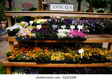 Flowers ready to buy and plant in Idaho