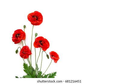Flowers red poppies (Papaver rhoeas, common names: corn poppy, corn rose, field poppy, red weed) on a white background. Top view, flat lay.